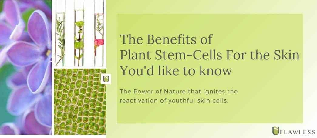 The benefits of Plant Stem Cells for the skin