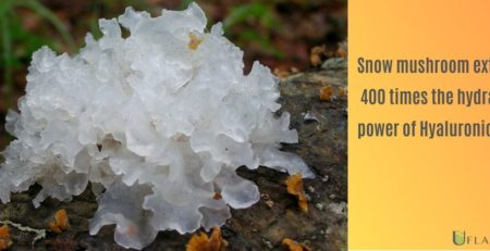 Snow Mushroom Extract 400 times the hydrating power of hyaluronic acid